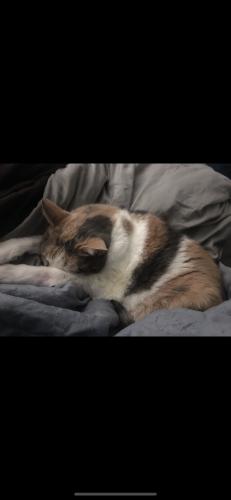 Lost Female Cat last seen Mossycup dr, Virginia Beach, VA 23462
