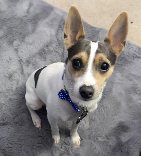 Lost Male Dog last seen Great Seneca Creek, Germantown, MD 20876