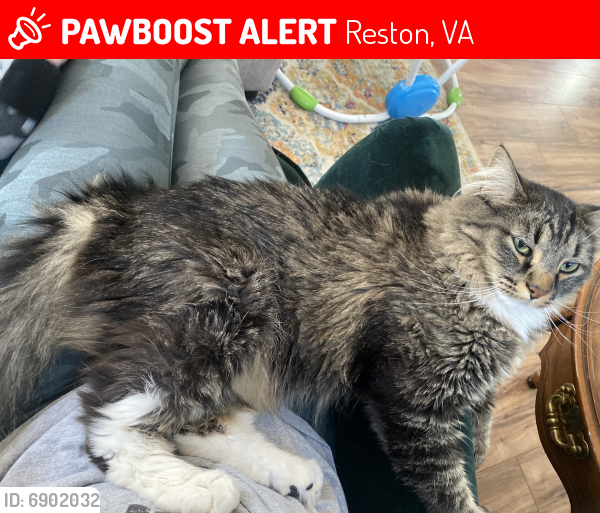 Lost Unknown Cat last seen Roundleaf ct. and Beacontree , Reston, VA 20190