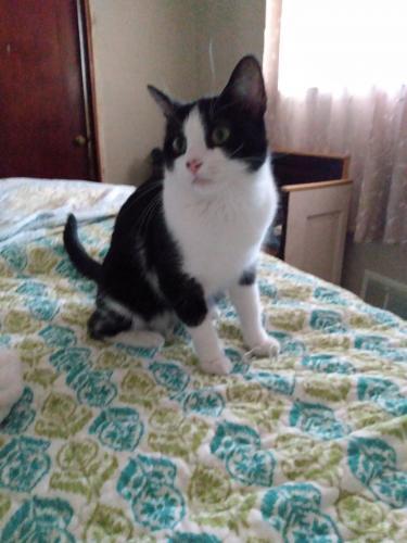 Lost Unknown Cat last seen Houdon ln, Virginia Beach, VA 23455