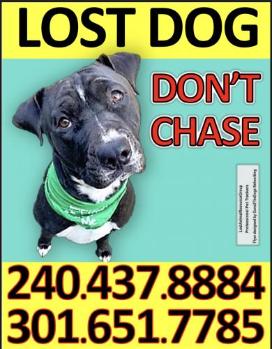 Lost Female Dog last seen Near East Jefferson Street Rockville MD 20852, Rockville, MD 20852