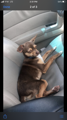 Lost Male Dog last seen Davis Rd Liberty Sc, Liberty, SC 29657