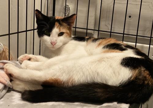 Lost Female Cat last seen Bayview Blvd & Morwin, Norfolk, VA 23503