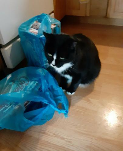 Lost Male Cat last seen W11 Spring W Shaft Penna , Cleveland, OH 44109