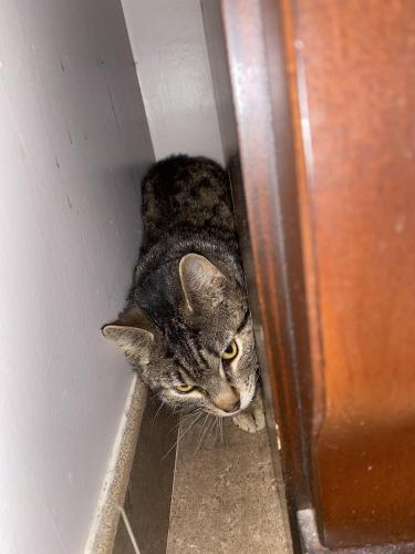 Found/Stray Unknown Cat last seen Huxley Place near Nettles, Newport News, VA 23606