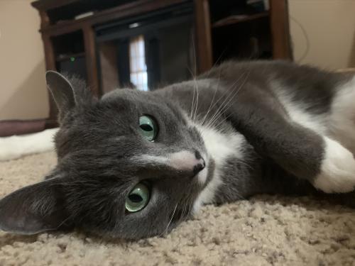 Lost Female Cat last seen Steve's landing, Soddy-Daisy, TN 37379