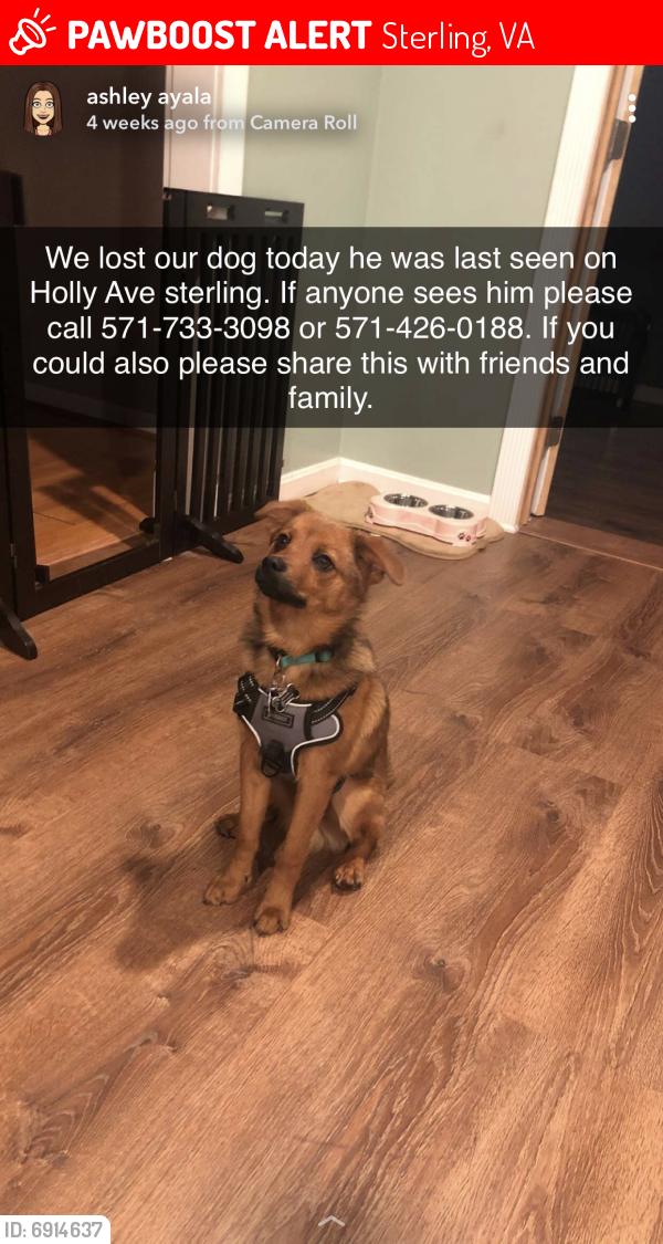 Lost Male Dog last seen Sterling Blvd , Sterling, VA 20164