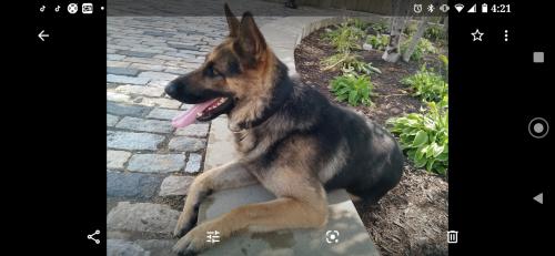 Lost Male Dog last seen Possum Run Road, Richland County, OH 44822
