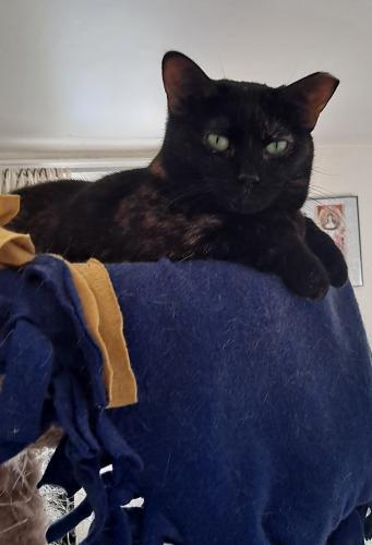 Lost Female Cat last seen E. Aurora Rd, Twinsburg, OH 44087