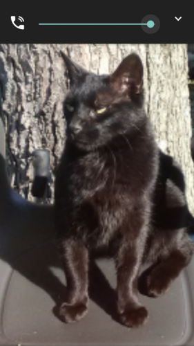 Lost Male Cat last seen Westbrook, Trotwood, OH 45426