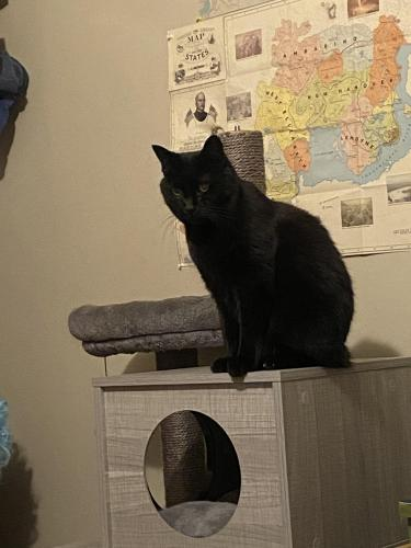 Lost Male Cat last seen Copper Pheasant Dr, Ring Neck Dr, Dayton, OH 45424