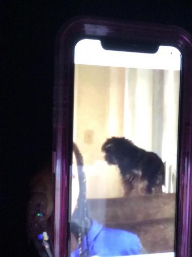 Lost Male Dog last seen Hough and chester, Cleveland, OH 44103