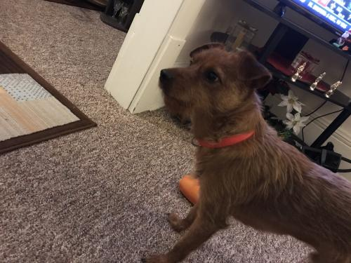 Lost Male Dog last seen Talmade rd , Akron, OH 44310