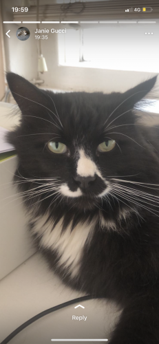 Lost Male Cat last seen Sovereign Road Kensington , District 4, MD 20895
