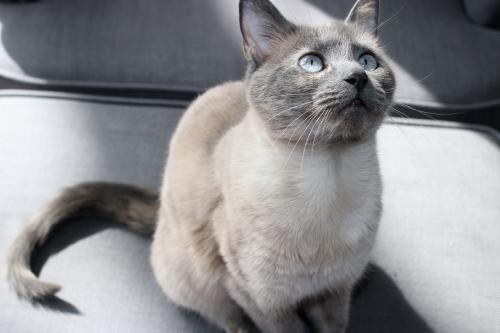 Lost Female Cat last seen Catoctin Cir SW, Leesburg, VA 20175