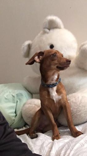 Lost Male Dog last seen Washington high school, Charles Town, WV 25414