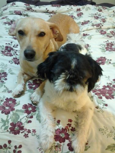 Lost Male Dog last seen St Jude Church, Rockville, MD 20853