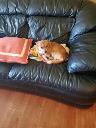 Lost Male Dog last seen Seminary rd close 395, Alexandria, VA 22311