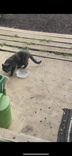 Found/Stray Unknown Cat last seen Hartland Rd, Merrifield, VA 22180