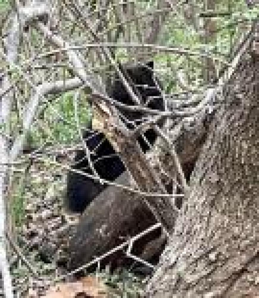 Shelter Stray Unknown Cat last seen Centreville, VA 20120, Fairfax, VA 22032