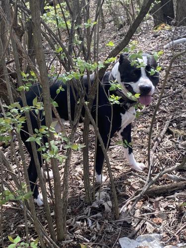 Lost Male Dog last seen Philadelphia dr, Dayton, OH 45402