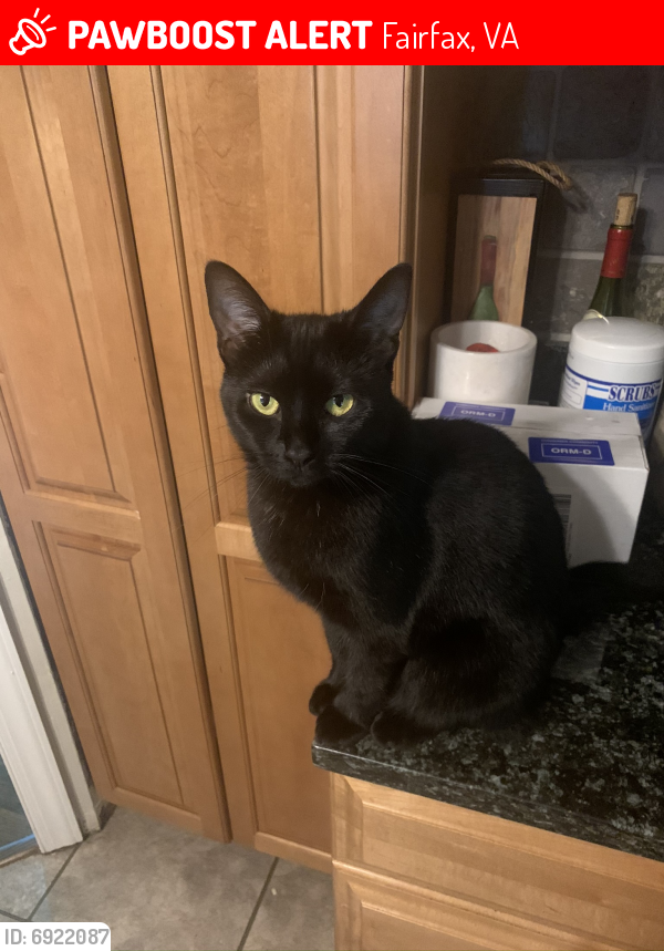 Lost Female Cat last seen Covent Ct & Richardson , Fairfax, VA 22032