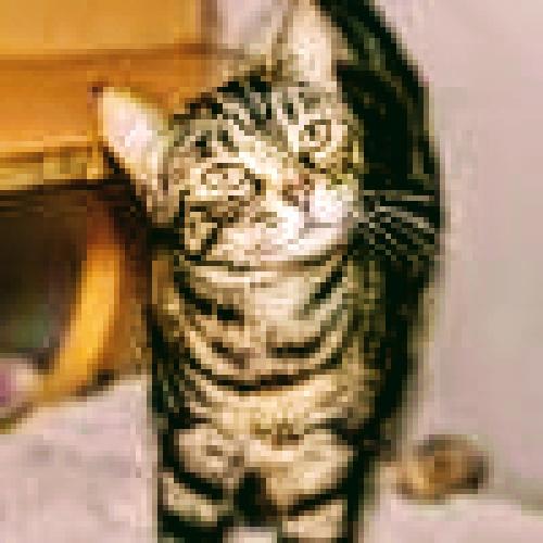 Lost Female Cat last seen Smithville and Burkhardt, Dayton, OH 45431