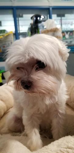 Found/Stray Male Dog last seen shanendoah river rt 7 bridge, Buckmarsh, VA 22611