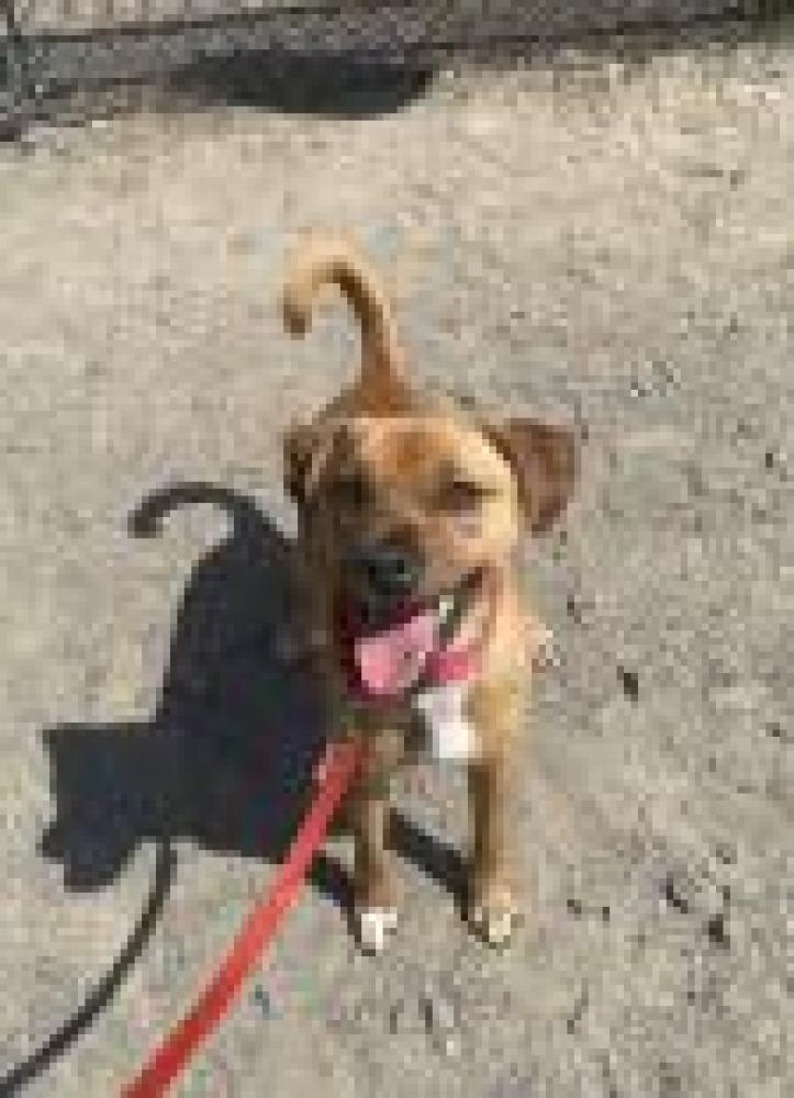 Shelter Stray Male Dog last seen Fairfax, VA 22030, Fairfax, VA 22032
