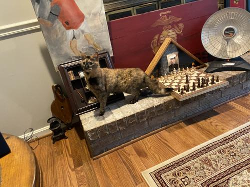 Lost Female Cat last seen Shadow fox ct and tall timber dr, Gainesville, VA 20155