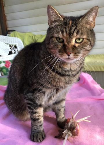 Lost Female Cat last seen Emerson Avenue, McLean, VA 22101