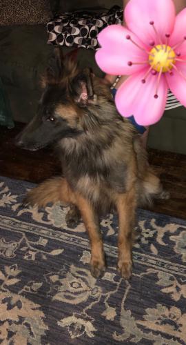 Found/Stray Female Dog last seen Shore Drive and Little Creek, Norfolk, VA 23518