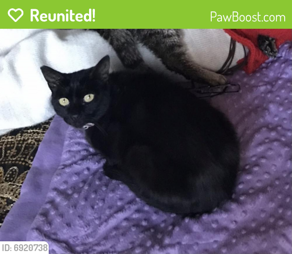 Reunited Female Cat last seen Opposite Shell petrol station Northway Maghull/Lydiate, Maghull, England