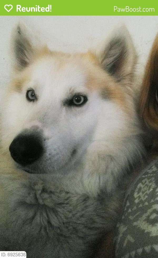 Reunited Male Dog last seen Fiesta @ Fulton St, Houston, TX 77009