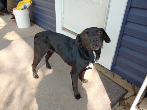 Found/Stray Male Dog last seen Walborn Reservoir, Stark County, OH 44601