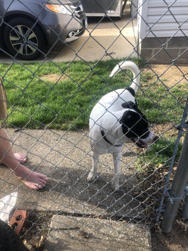 Found/Stray Male Dog last seen Moore road , Akron, OH 44319
