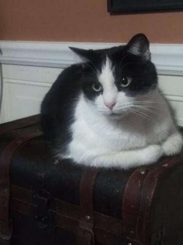 Lost Male Cat last seen Taywood, Old Salem, Clayton, OH 45415
