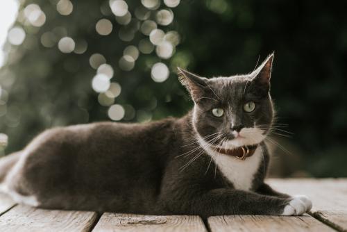 Lost Male Cat last seen Near w park way Akron oh 44312, Akron, OH 44312