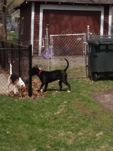 Lost Male Dog last seen Bloomfield and Burton, Akron, OH 44302