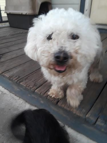 Lost Male Dog last seen Near s highland Parker ave, Chattanooga, TN 37404