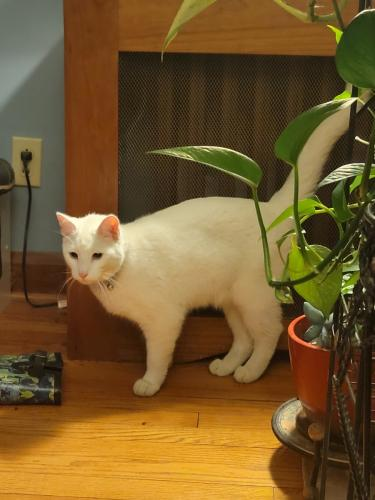 Found/Stray Unknown Cat last seen Sand Run Road, Fairlawn Country Club, Akron, OH 44313