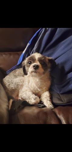 Lost Male Dog last seen Near bertwick ln Chesapeake , Chesapeake, VA 23325