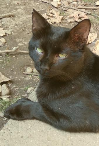 Lost Male Cat last seen Mulberry Road & Route 306, Chesterland, OH 44026