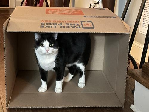 Lost Male Cat last seen Pitts RD and Levi Rd , Hixson, TN 37343