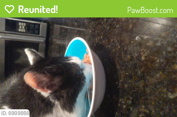 Reunited Male Cat last seen Florida Ave and Bayview blvd, Portsmouth, VA 23707