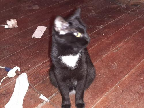 Lost Female Cat last seen Alphus Street, Poquoson, VA 23662