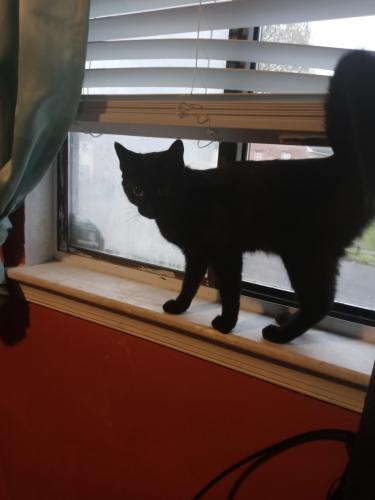 Found/Stray Female Cat last seen West lane an hill meadiw dr, Virginia Beach, VA 23454