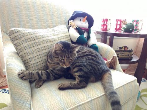 Lost Male Cat last seen Graver Lane and Fentress Loop, Chesapeake, VA 23322