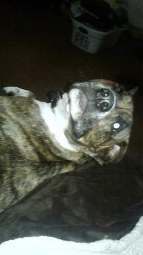Lost Male Dog last seen Webster.wagerford.keenan, Dayton, OH 45414