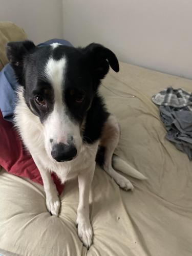 Lost Male Dog last seen Swanson Rd./Hurricane Creek/Hurricane Heights, Ringgold, GA 30736